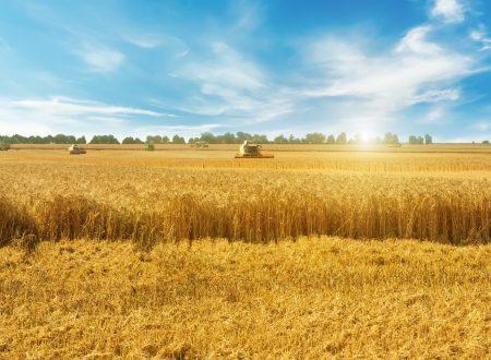 SOS, L'AGRICOLTURA MUORE DI CALDO